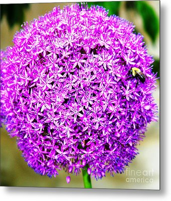 Busy Little Bee Metal Print