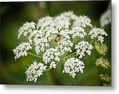 Busy May Bee Metal Print by Tom Trimbath