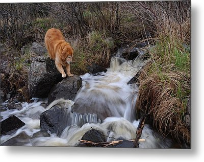 But Mom I Might Get My Feet Wet Metal Print by Sandra Updyke