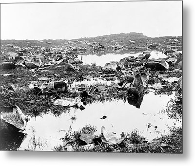 Butchered Galapagos Tortoises Metal Print by Library Of Congress