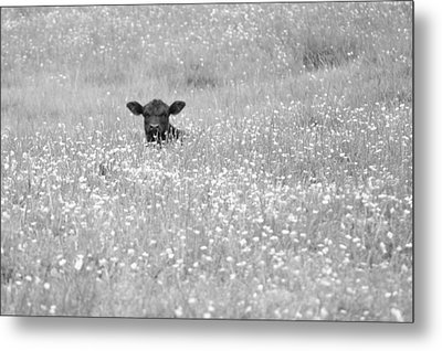 Buttercup In Black-and-white Metal Print
