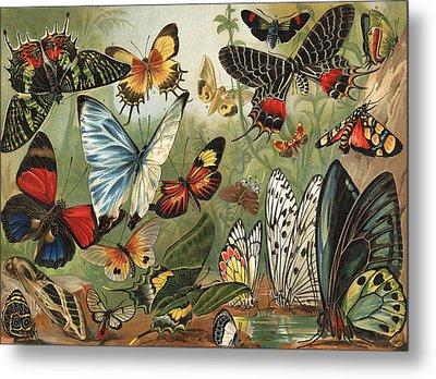 Butterflies 2 Metal Print by Mutzel