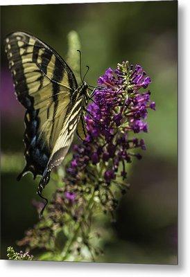 Butterflies Along The Blue Ridge Metal Print