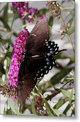 Metal Print featuring the photograph Butterflies Are Free by James C Thomas