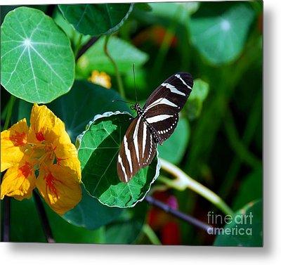 Butterflies Are Free Metal Print by Mel Steinhauer