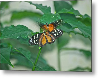 Metal Print featuring the photograph Butterflies Gentle Touch by Thomas Woolworth
