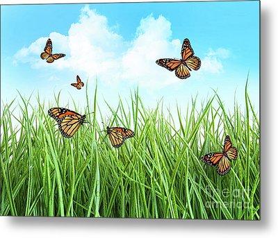 Butterflies In Tall Wet Grass  Metal Print by Sandra Cunningham