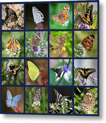 Butterflies Squares Collage Metal Print by Carol Groenen