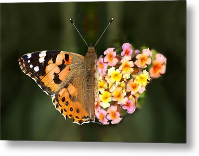 Butterflower Metal Print