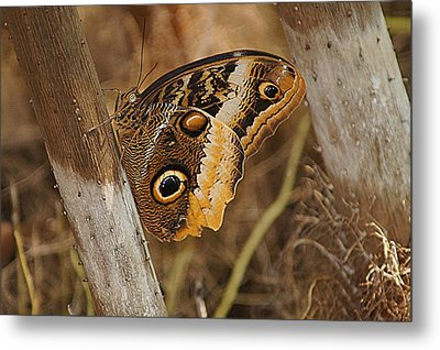 Metal Print featuring the photograph Butterfly 1 by Kathy Churchman