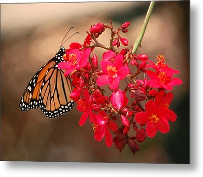 Metal Print featuring the photograph Butterfly 1 by Leticia Latocki