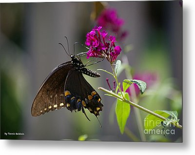 Metal Print featuring the photograph Butterfly 1 by Tannis  Baldwin