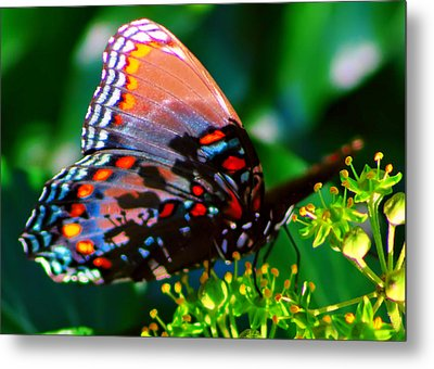 Butterfly 2 Metal Print by Kara  Stewart