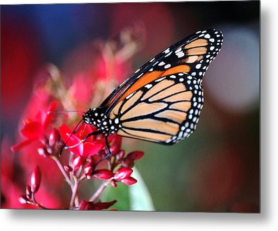 Metal Print featuring the photograph Butterfly 2 by Leticia Latocki