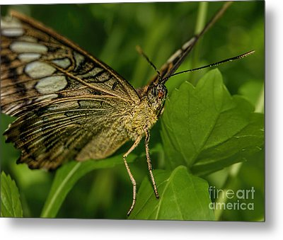 Metal Print featuring the photograph Butterfly 2 by Olga Hamilton