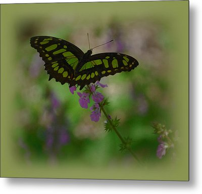 Metal Print featuring the photograph Butterfly 4 by Leticia Latocki