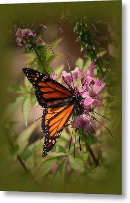 Metal Print featuring the photograph Butterfly 5 by Leticia Latocki