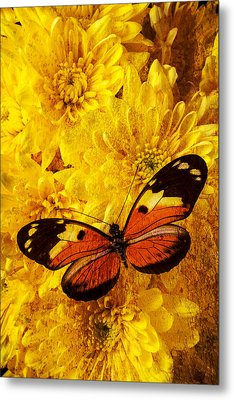 Butterfly Abstract Metal Print by Garry Gay