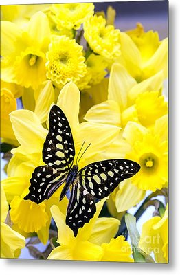 Butterfly Among The Daffodils Metal Print