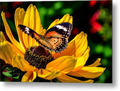 Butterfly And Bloom Metal Print by Julie Palencia