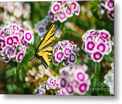 Butterfly And Blooms - Spring Flowers And Tiger Swallowtail Butterfly. Metal Print by Jamie Pham