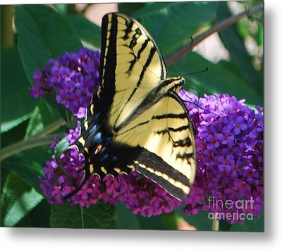 Metal Print featuring the photograph Butterfly And Bush by William Wyckoff