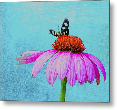 Butterfly And Coneflower On Turquoise Metal Print by Dan Holland