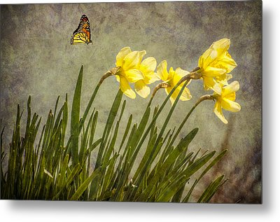 Butterfly And Daffodils Metal Print