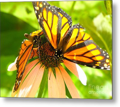 Butterfly And Friend Metal Print