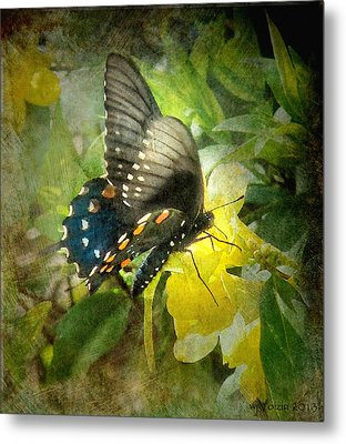 Butterfly And Jasmine Metal Print