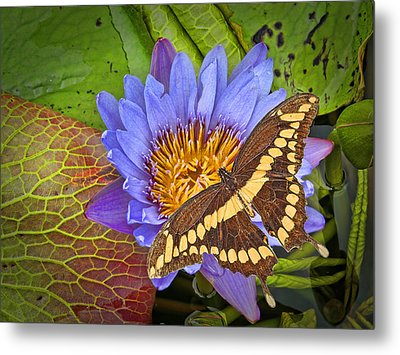 Butterfly And Lily Metal Print by Rudy Umans