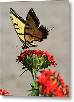 Metal Print featuring the photograph Butterfly And Maltese Cross 1 by Aaron Aldrich