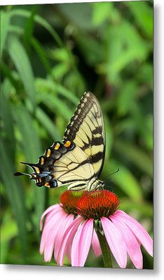 Butterfly Metal Print by Andrea Dale