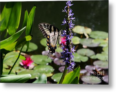 Butterfly At Lunch Metal Print