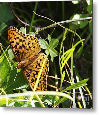Butterfly At Signal Mountain Metal Print by Belinda Greb