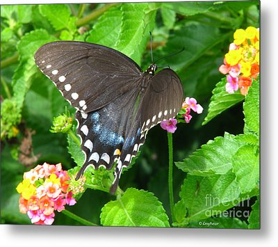 Butterfly Ballot Metal Print by Greg Patzer