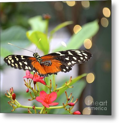 Metal Print featuring the photograph Butterfly Beauty by Carla Carson