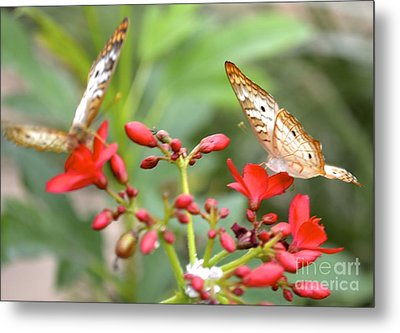 Metal Print featuring the photograph Butterfly Besties by Carla Carson