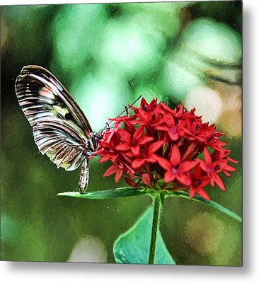 Butterfly Metal Print by Bill Howard
