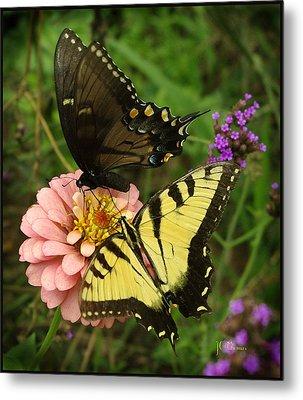 Swallowtaill Bliss Metal Print