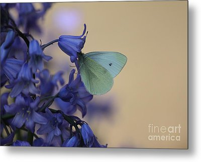 Butterfly Bounty Metal Print by Erica Hanel