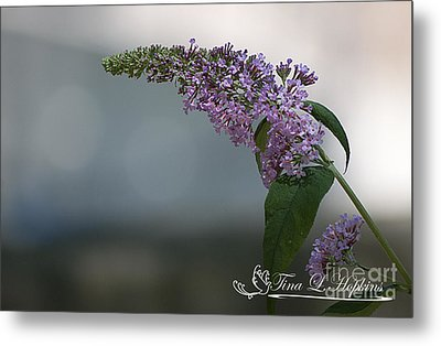 Metal Print featuring the photograph Butterfly Bush 20120706_165a by Tina Hopkins