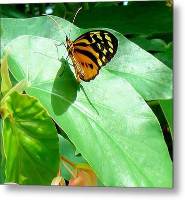 Metal Print featuring the photograph Butterfly Chasing Shadow by Janette Boyd