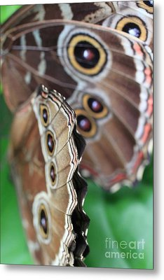 Butterfly Close Up  Metal Print by AR Annahita