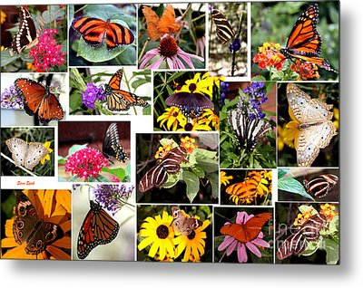 Metal Print featuring the photograph Butterfly Collage by Steven Spak