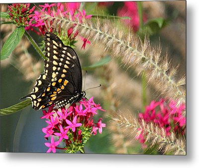 Butterfly Days Metal Print by Suzanne Gaff