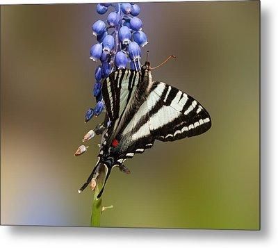 Butterfly Delight Metal Print by Lara Ellis