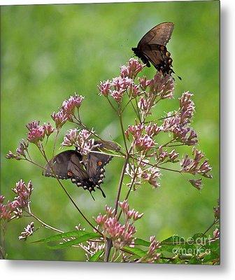 Butterfly Duet  Metal Print by Kerri Farley