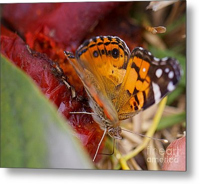 Metal Print featuring the photograph Butterfly by Erika Weber
