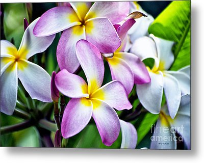Metal Print featuring the photograph Butterfly Flowers by Thomas Woolworth
